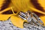 แหวนหมั้นเจ้าสาว แบบหรูๆแต่งงาน พิมม์นิยม