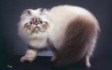 แมว เพื่อนรักที่คุณ มองข้าม
